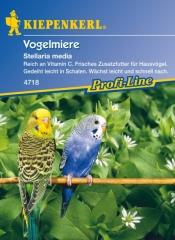 Kiepenkerl Vogelmiere (Saatgut)