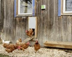 Automatische Hühnertür Komplett-Set, inkl. Schiebetür 300 x 400mm