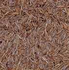 Grassamen-Mischung 500 g
